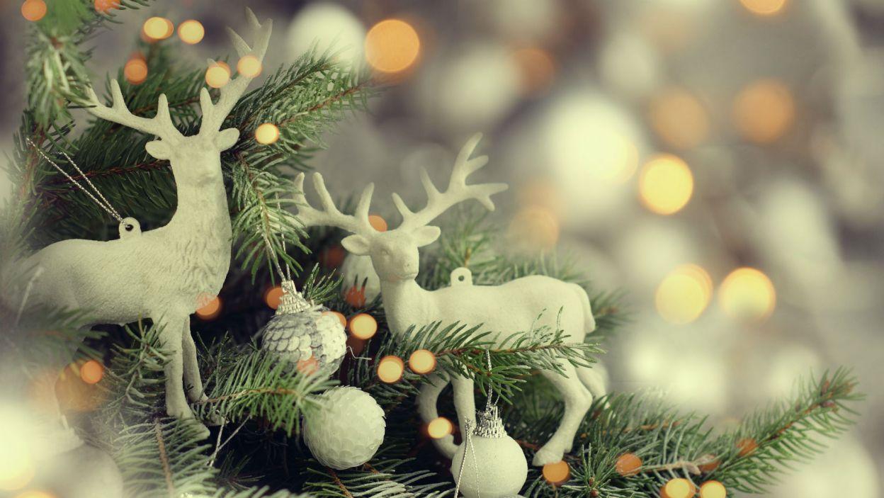 ... a inni na faunę (Fot. Shutterstock)