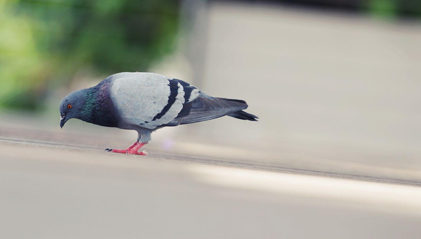 Zwierzę padło (fot. Shutterstock/SURKED)