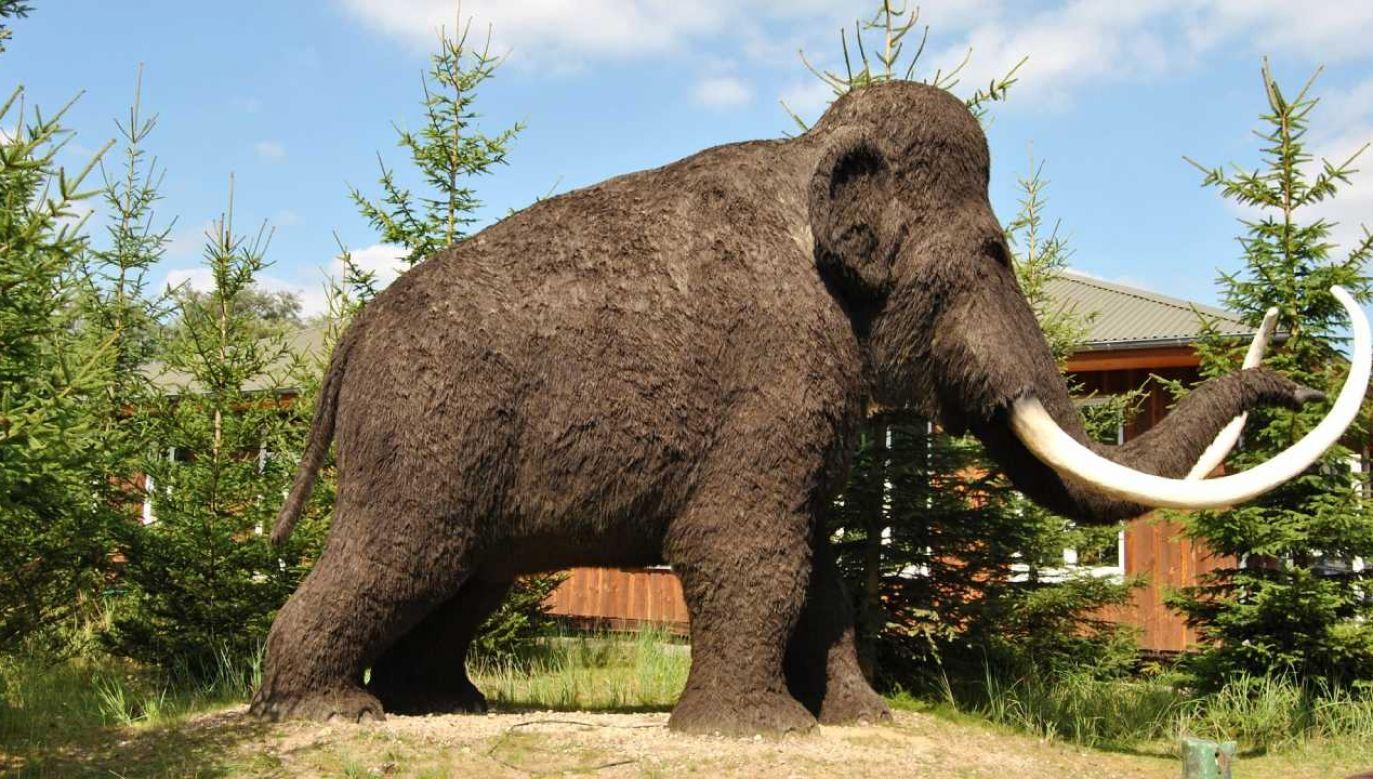 Rzeźba mamuta (fot. Pixabay/hansbenn)
