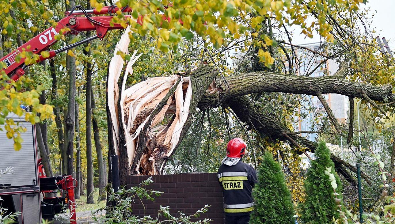 Strażacy usuwają powalone drzewo na ul Modrej w Szczecinie (fot. PAP/Marcin Bielecki)