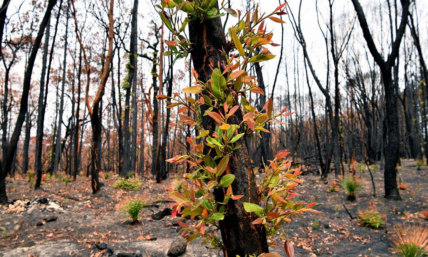 (fot. PAP/EPA/JOEL CARRETT)