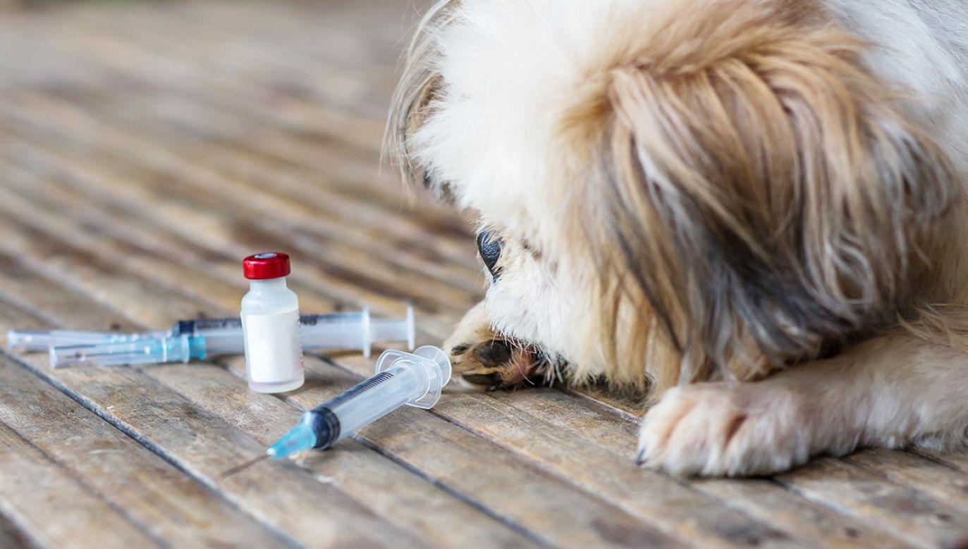 Obecnie dostępna na rynku szczepionka jest kosztowna i skomplikowana w podawaniu (fot. Shutterstock/ WIRACHAIPHOTO)