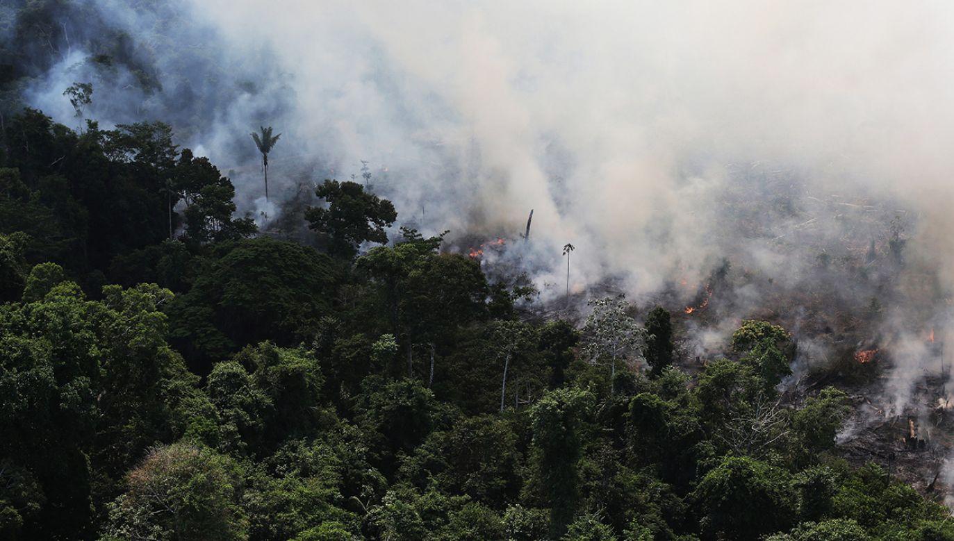 """Ogień trawi lasy deszczowe nazywane """"zielonymi płucami Ziemi"""" (fot. REUTERS/Nacho Doc)"""