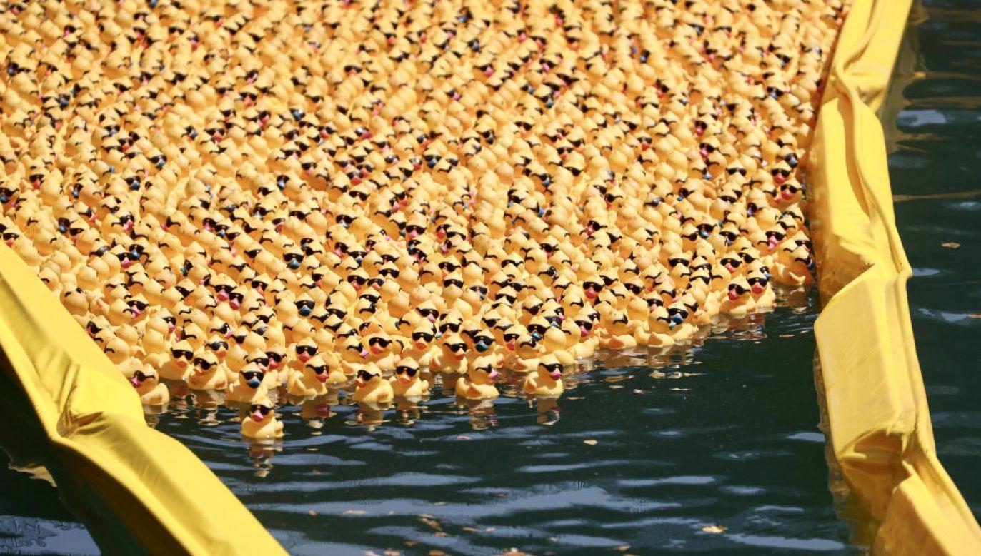 Gumowe kaczki na rzece Chicago (fot. Scott Olson/Getty Images)