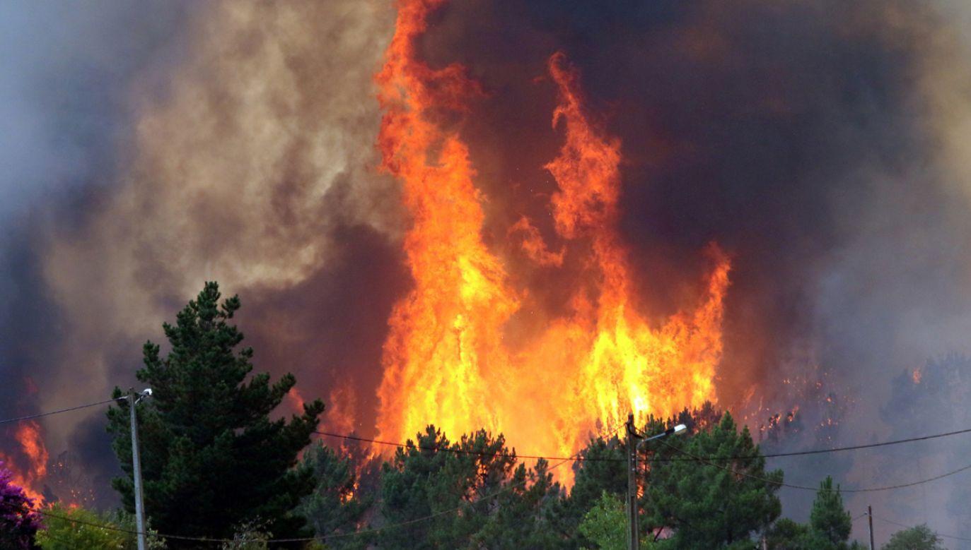 Pożary towarzyszące fali upałów strawiły 6,5 tys. hektarów upraw i lasów we Francji  (fot. PAP/EPA/ANTIONIO JOSE)