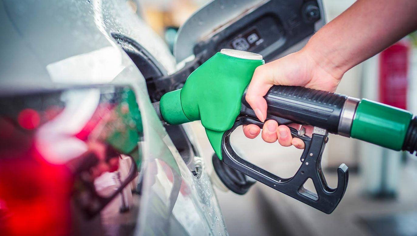 12 stanów apeluje o zakaz sprzedaży samochodów benzynowych od 2035 roku (fot. Shutterstock/zedspider)
