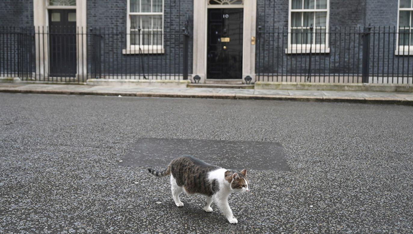 Właścicielka nie dowierzała, kiedy dowiedziała się, że jej 17-letnia kotka żyje (fot. PAP/EPA/NEIL HALL)