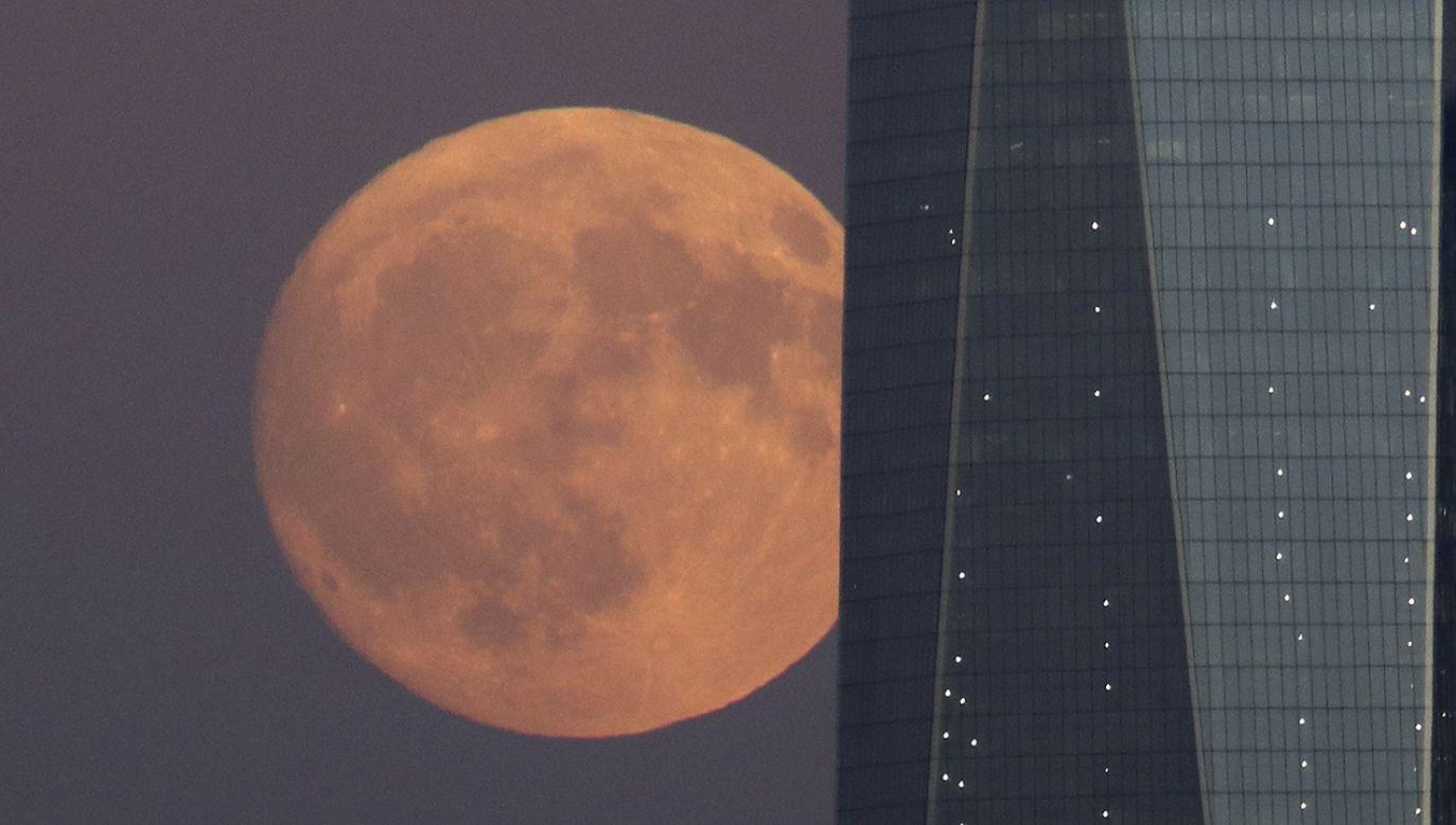 Pierwsza pełnia księżyca w roku zwyczajowo nazywana jest Wilczym Księżycem (fot. Gary Hershorn/Getty Images)