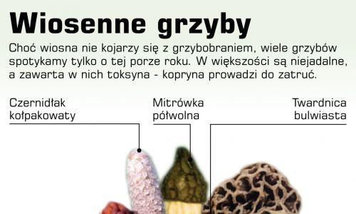 Grafika: PAP, Adam Ziemienowicz