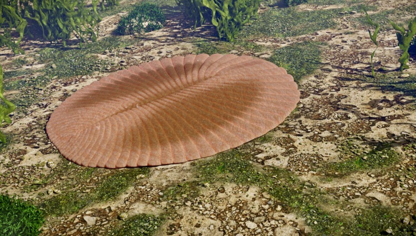 Dysputa między naukowcami, jak wyglądało pierwsze zwierzę na Ziemi oparta nie tylko o skamieniałości (fot. Shutterstock/Dotted Yeti)
