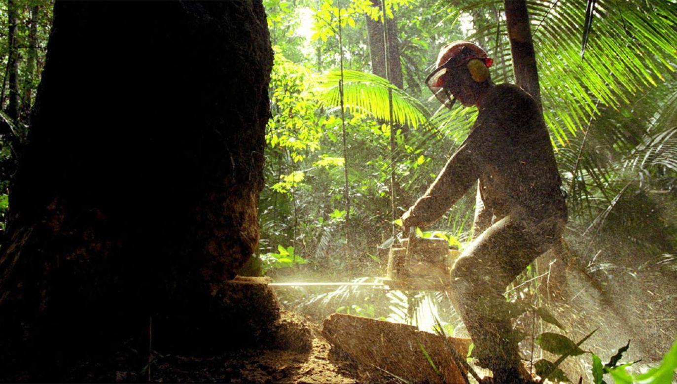 Eksperci krytykują Brazylię za wylesianie Puszczy Amazońskiej (fot. PAP/EPA/MARCELO SAYAO)