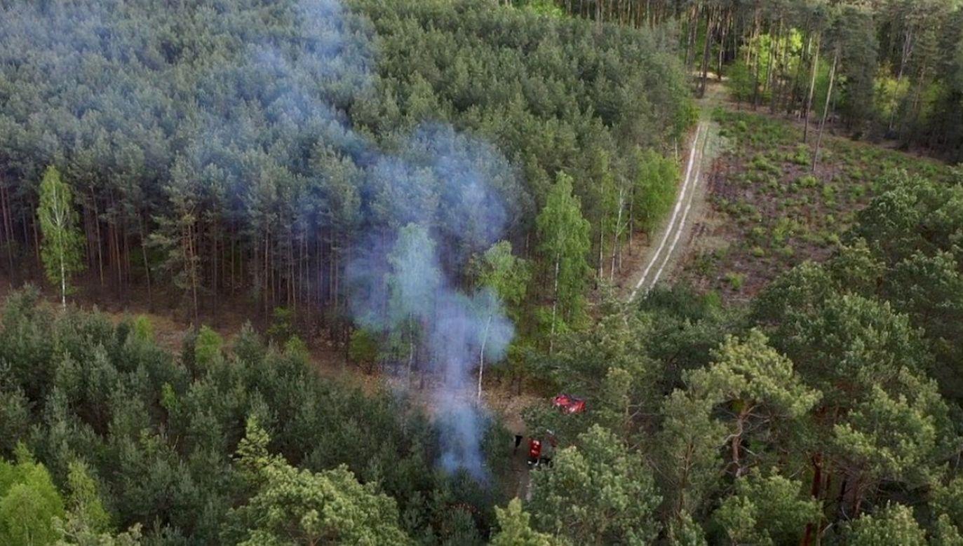 Mężczyzna został przyłapany na gorącym uczynku, dzięki leśnikom, którzy użyli drona (fot. tt/Lasy Państwowe)