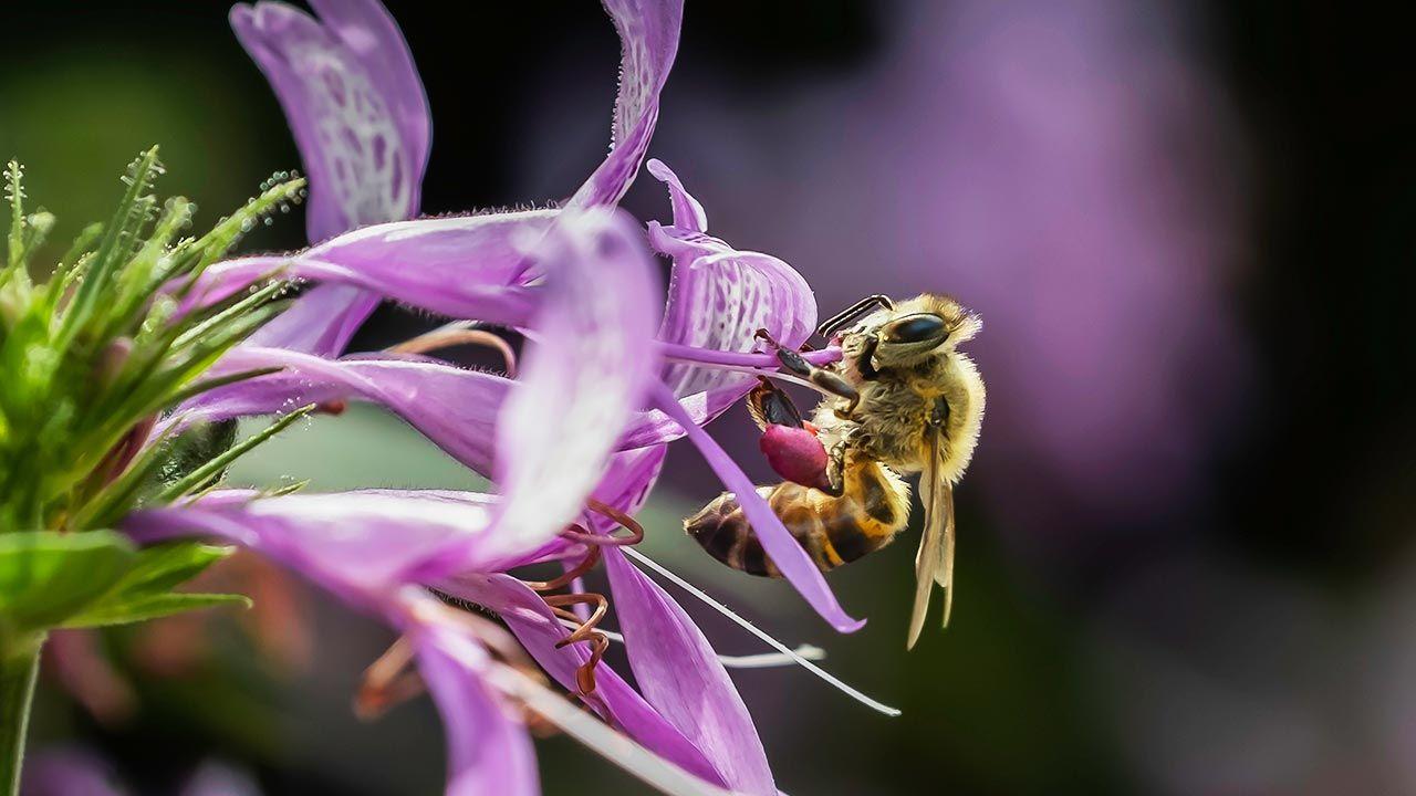 Rozmnażanie bezpłciowe nie jest wśród owadów rzadkością (fot. Shuttertsotck/ Kevin Farr Foto)