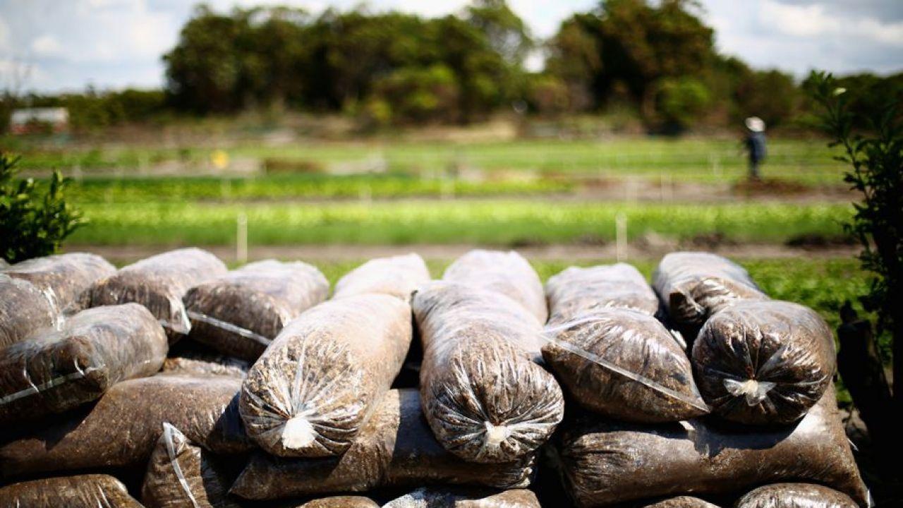 Badacze przekonują, że pestycydy moga być rakotwórcze tylko przy stosowaniu ich w skali przemysłowej (fot. Mark Kolbe/Getty Images)