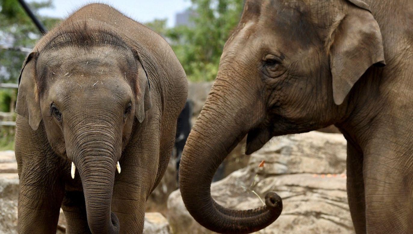 Zwierzęcia nie udało się uratować (fot. PAP/EPA/JOEL CARRETT, zdjęcie ilustracyjne)