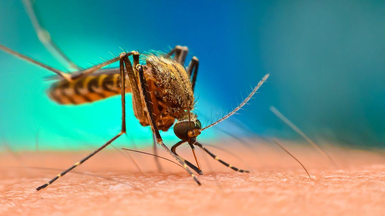 Naukowcy odkryli strategię malarii (fot. Shutterstock/Digital Images Studio)