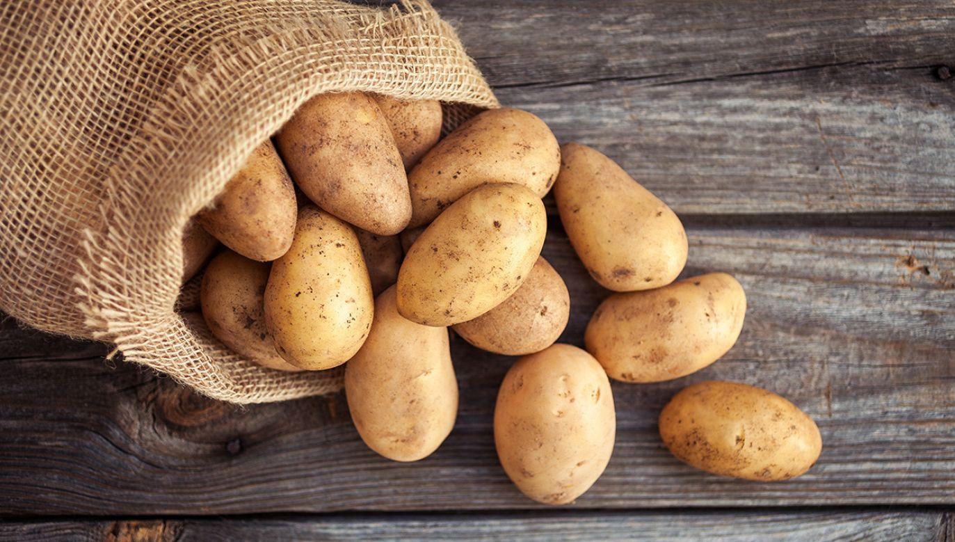 Uczeni przekonują, że ziemniaki mogą przetrwać kryzys klimatyczny (fot.  Shutterstock/Val_R)