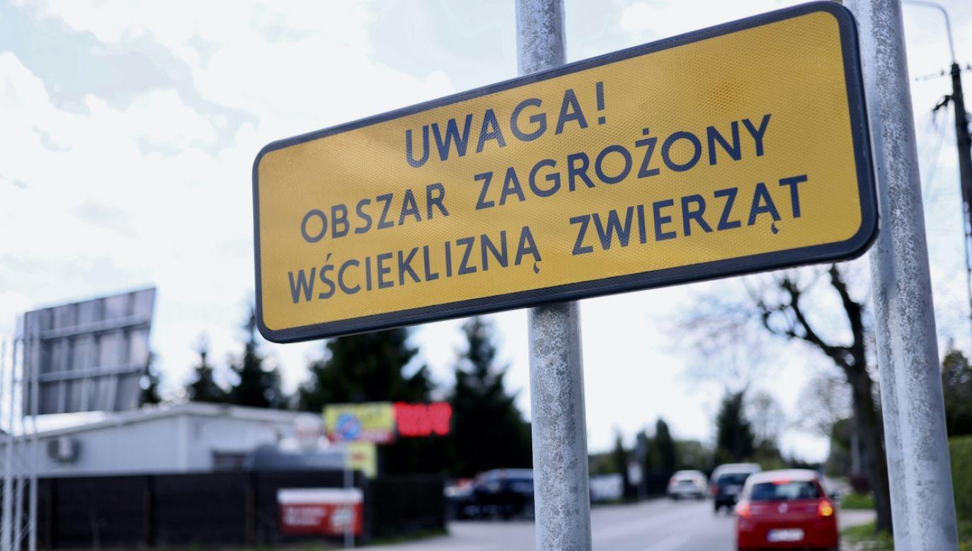 Wścieklizna nadal atakuje na Mazowszu (fot. PAP/L.Szymański)