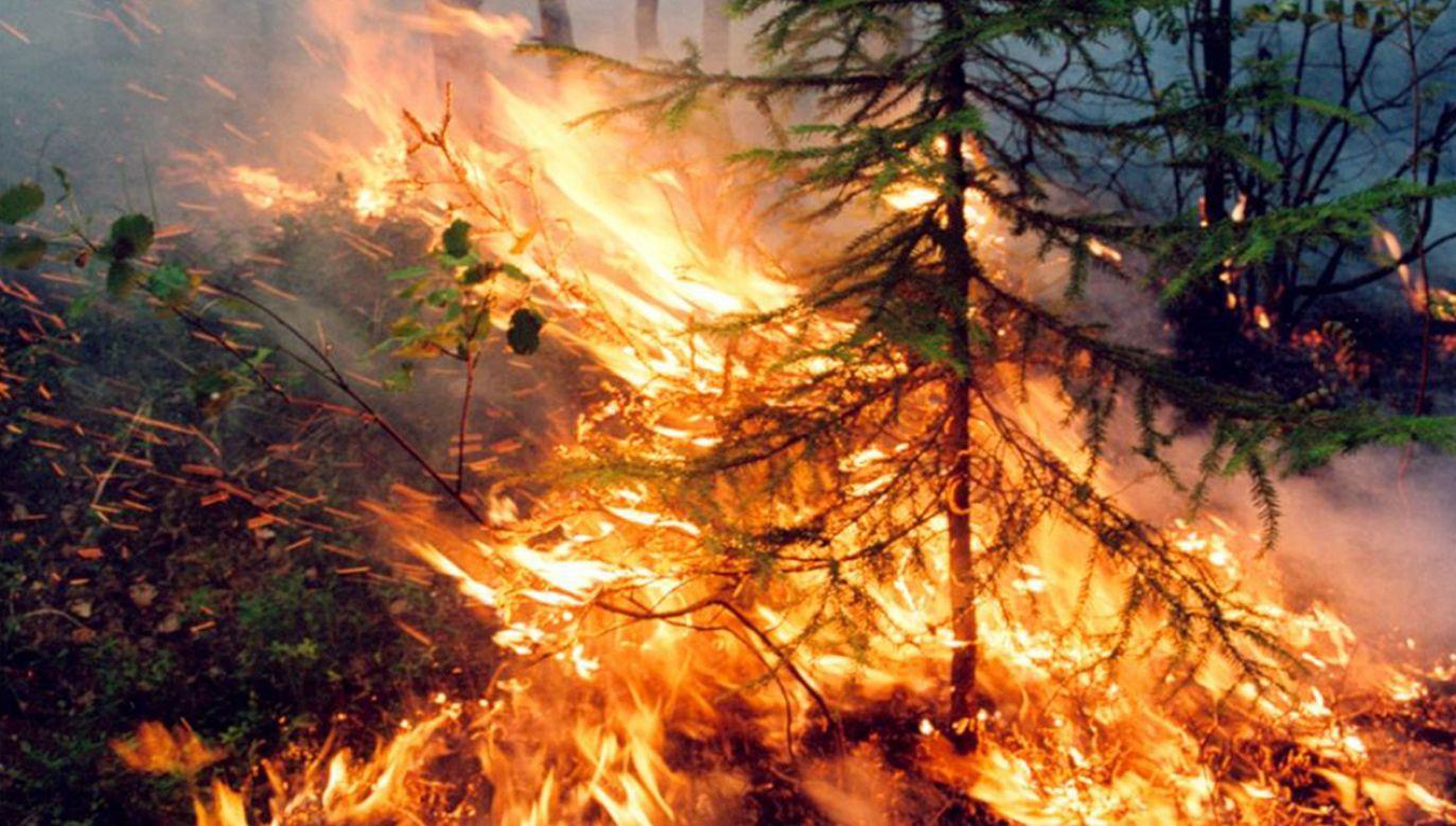 Ogień na Syberii ogarnął 3 mln hektarów  (fot. PAP/EPA/RUSSIAN FEDERATION SERVICE AVIATION FOREST PROTECTION)
