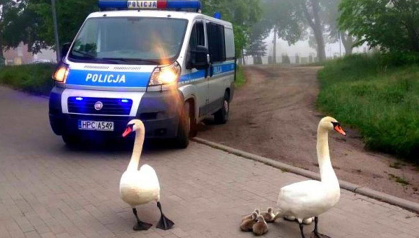 Policyjna akcja (fot. Policja)