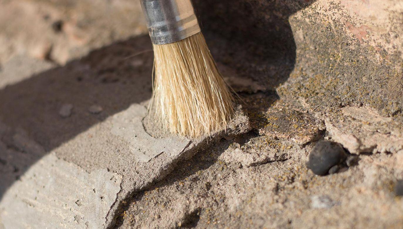 W Dębianach dokonano zaskakującego odkrycia (fot. Shutterstock/Irina and Denis)