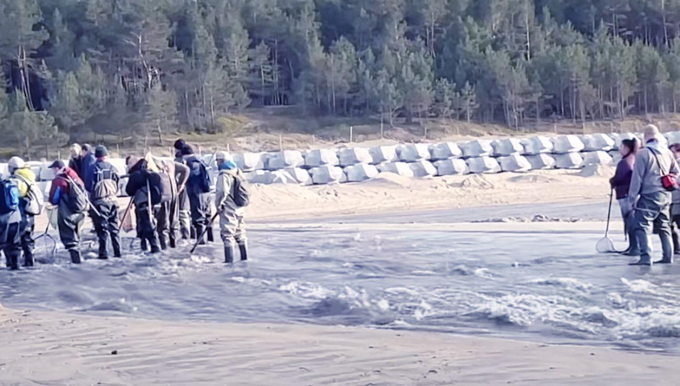 Bursztyn będzie można znaleźć na plażach poza terenem przekopu Mierzei (fot. YouTube/Telewizja Regionalna Żuławy TV)