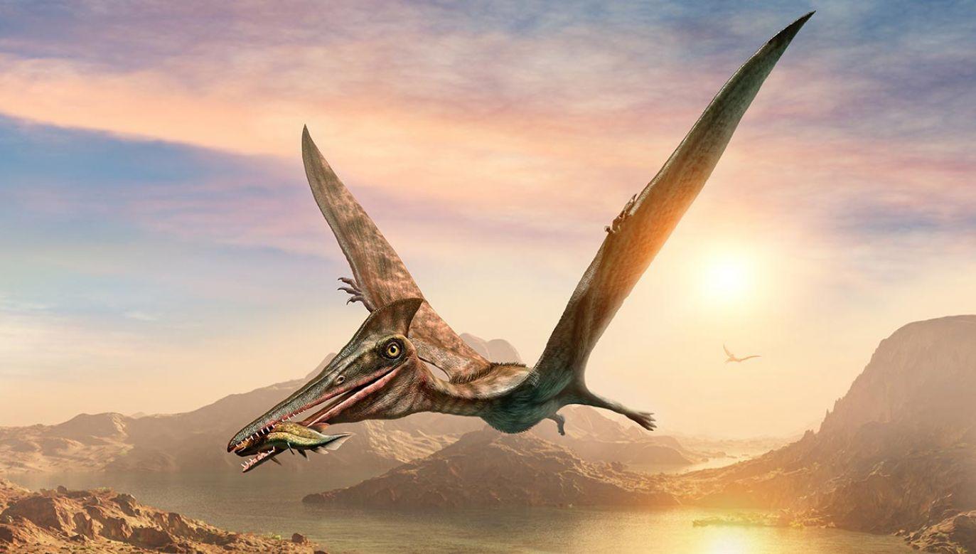 Młode pterozaury miały silną kość ramieniową (fot. Shuttertock/Warpaint)