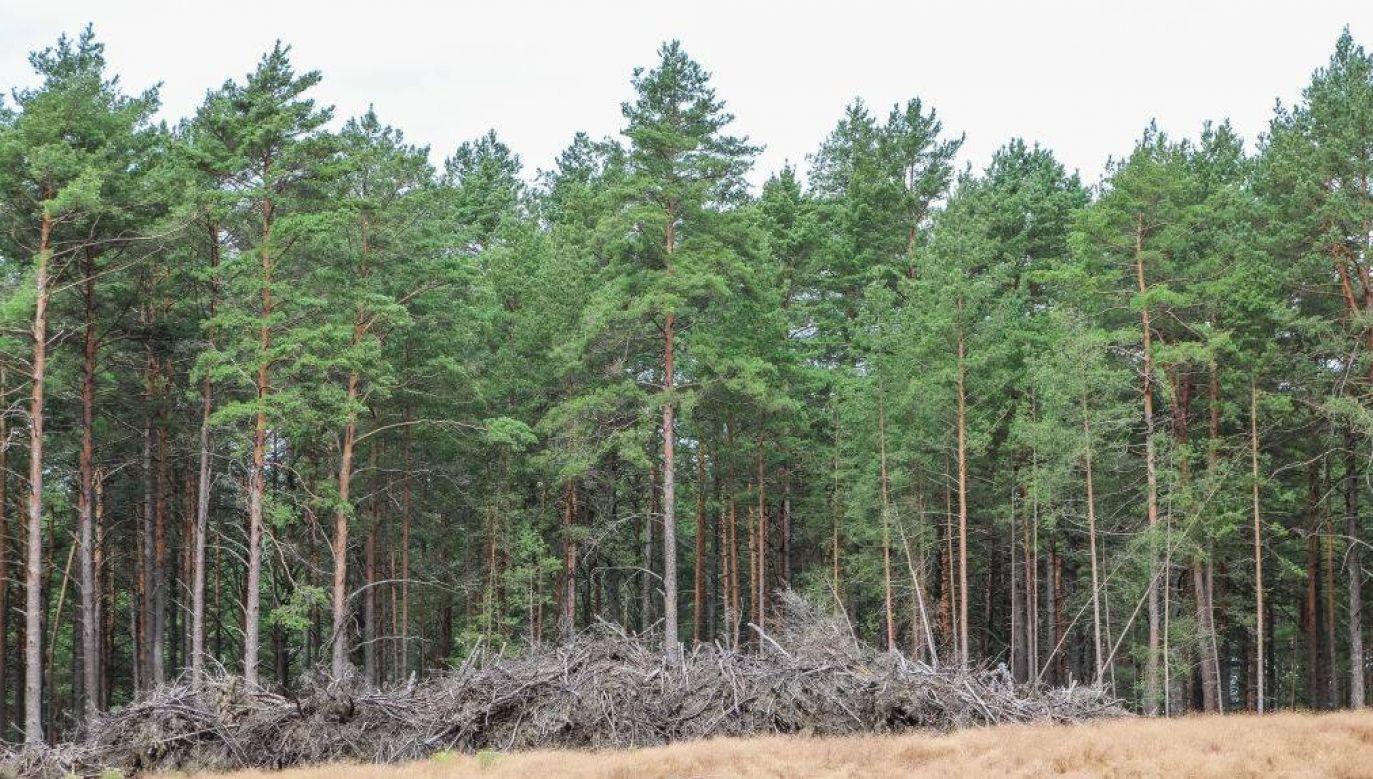Zwłoki mężczyzny porzucono w lesie (fot.Michal Fludra/NurPhoto via Getty Images)