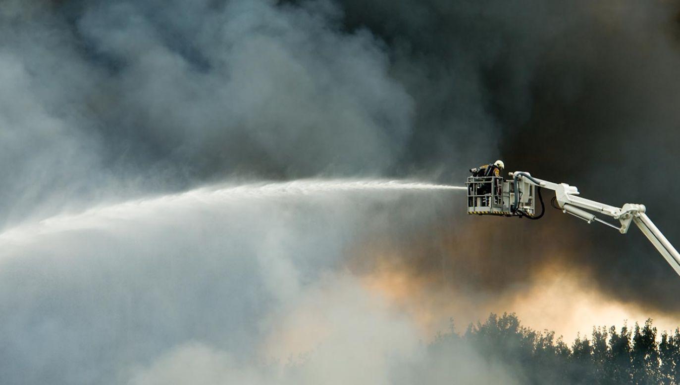 Przyczyny pożaru nie są jeszcze znane (fot. Shutterstock/Eric Gevaert)
