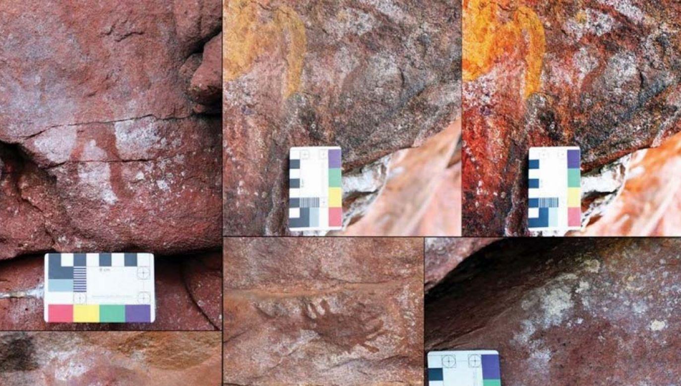 Artyści uwiecznili między innymi kraba (fot. Flinders University/Liam Brady)