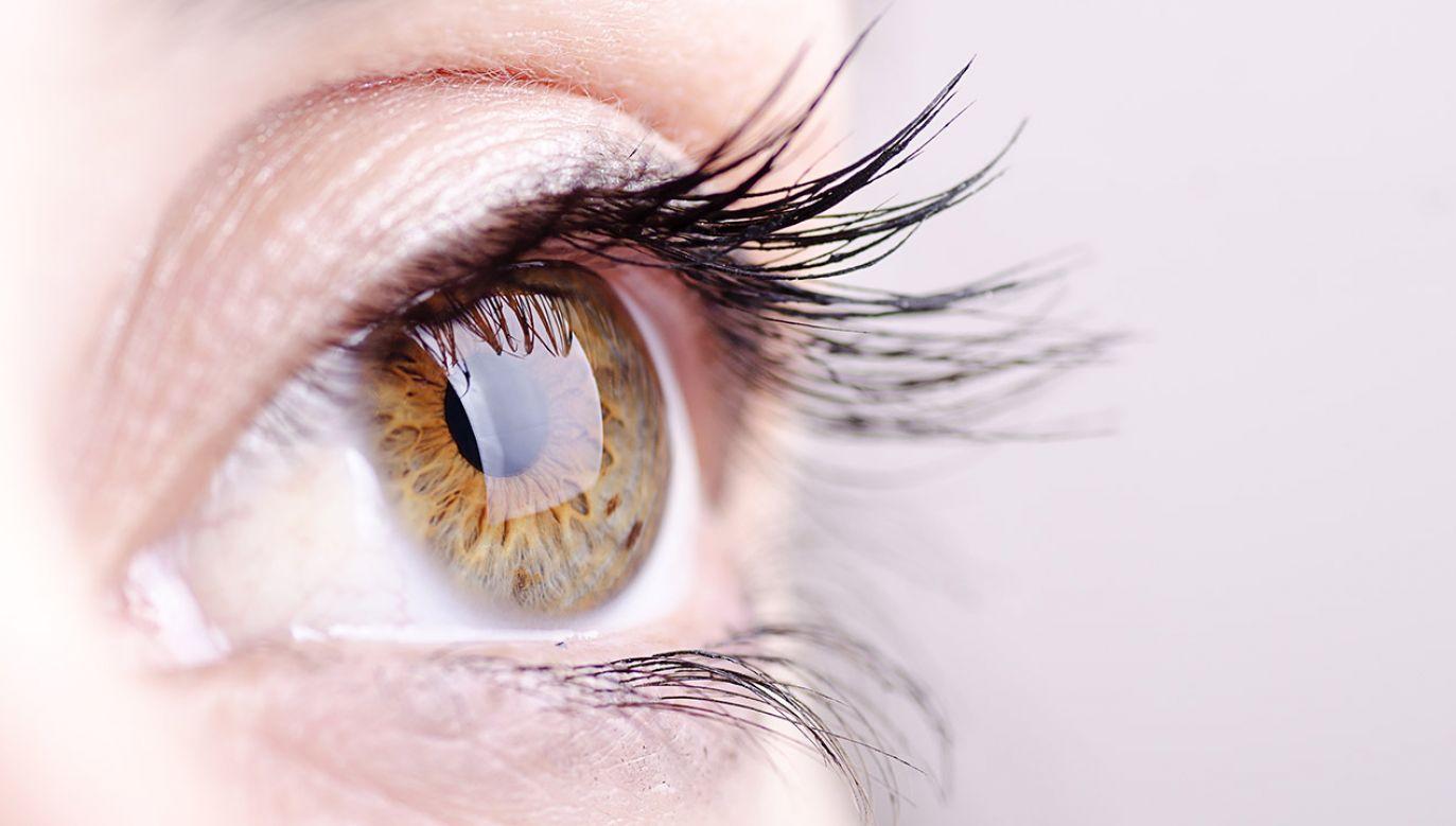 Naukowcy zobaczyli widzenie (fot. Shutterstock/FotoAndalucia)