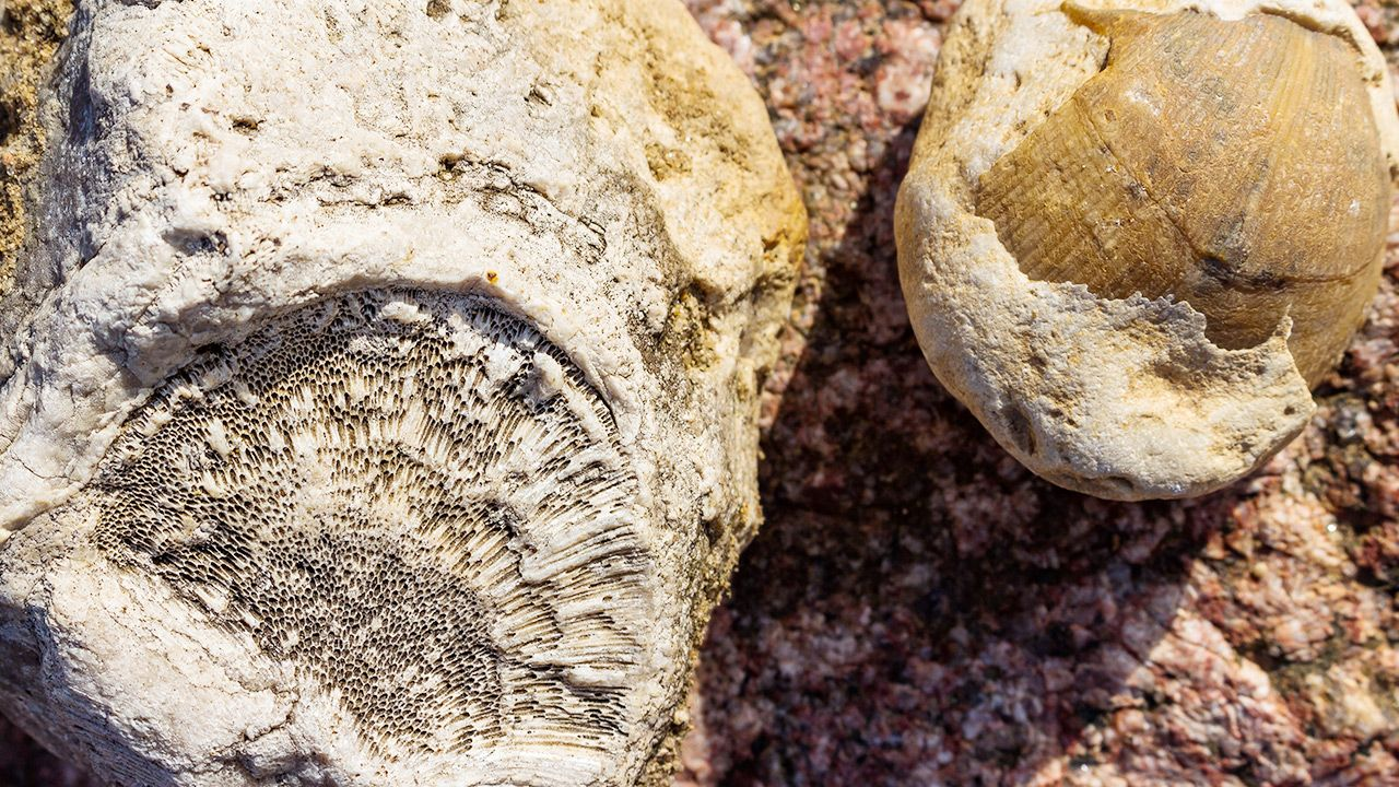 W Kanadzie  naukowcy prawdopodobnie znaleźli  najstarsze skamieliny zwierząt (fot. Shutterstock)