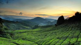 Tempat najlepsze randki Penang