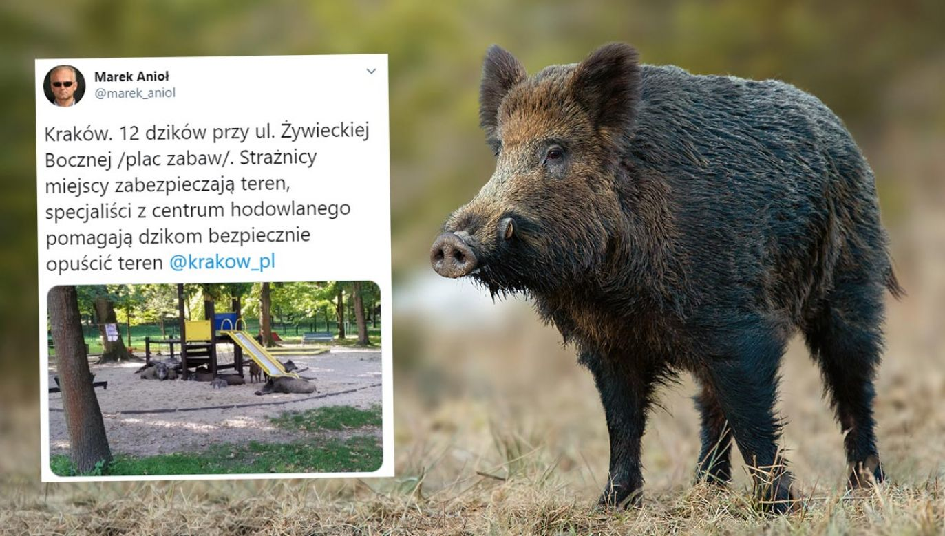To nie pierwszy taki incydent na terenie Krakowa (fot. Shutterstock/WildMedia)