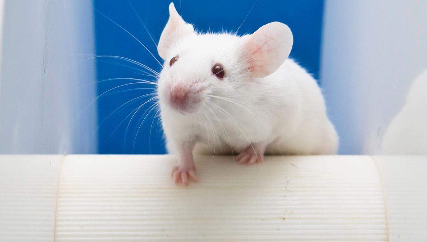 Hybrydy mają pozwolić m.in. na badania choroby Alzheimera (fot. Shutterstock/unoL)