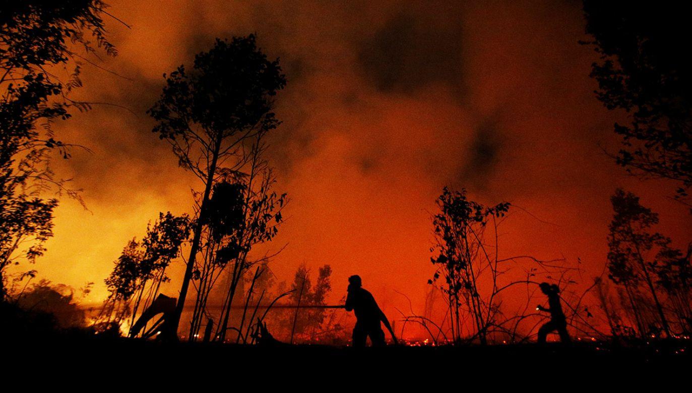 Pożary są najprawdopodobniej efektem nielegalnych działań plantatorów (fot. REUTERS/Willy Kurniawan)