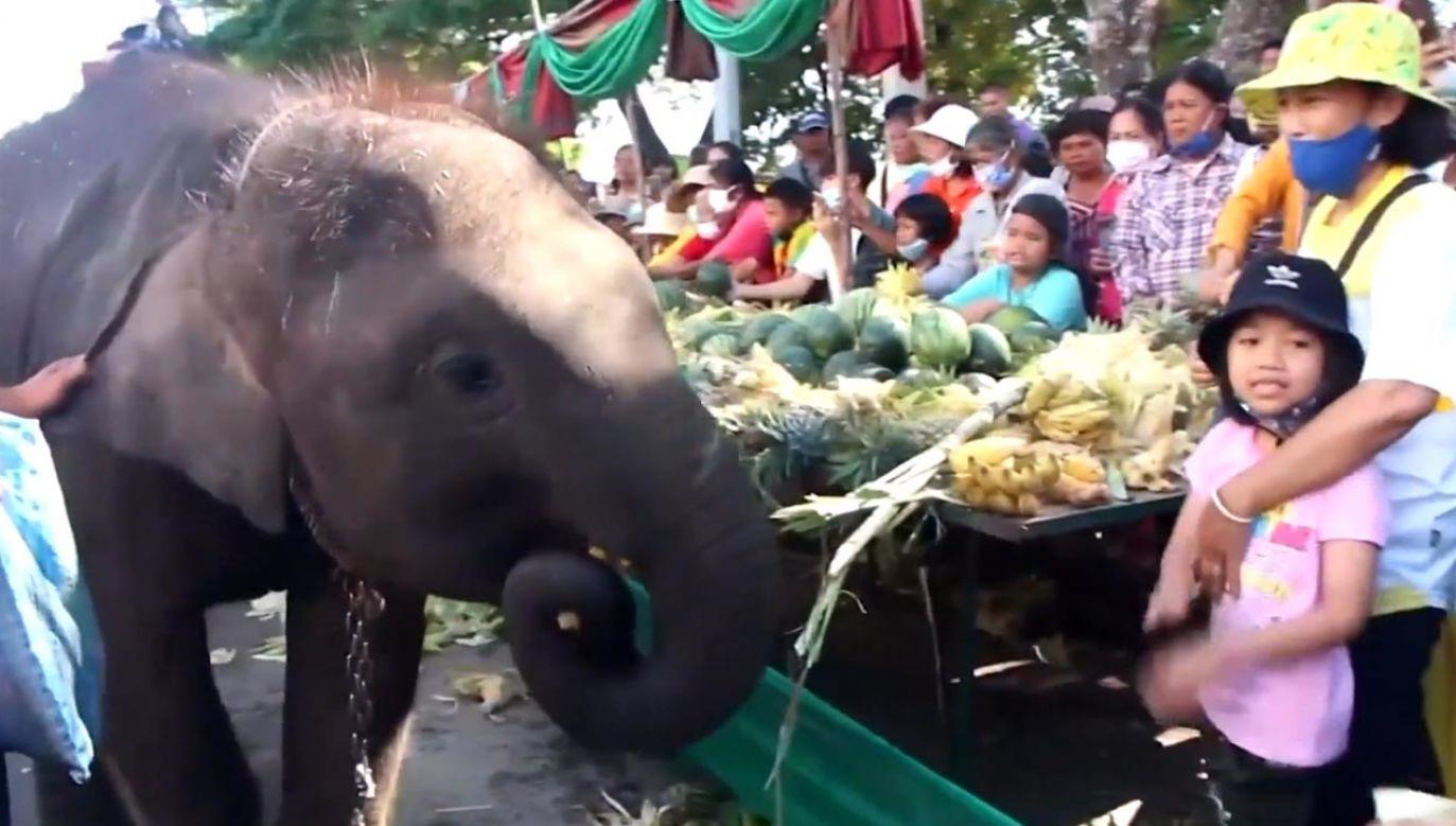 Słonie przeszły ulicami (fot. THMCOT - THE MASS COMMUNICATION ORGANIZATION OF THAILAND)