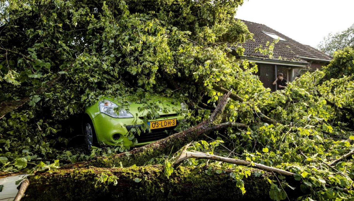 W wiosce Leersum dziesiątki drzew zostało wyrwanych z korzeniami (fot. PAP/EPA/SEM VAN DER WAL)