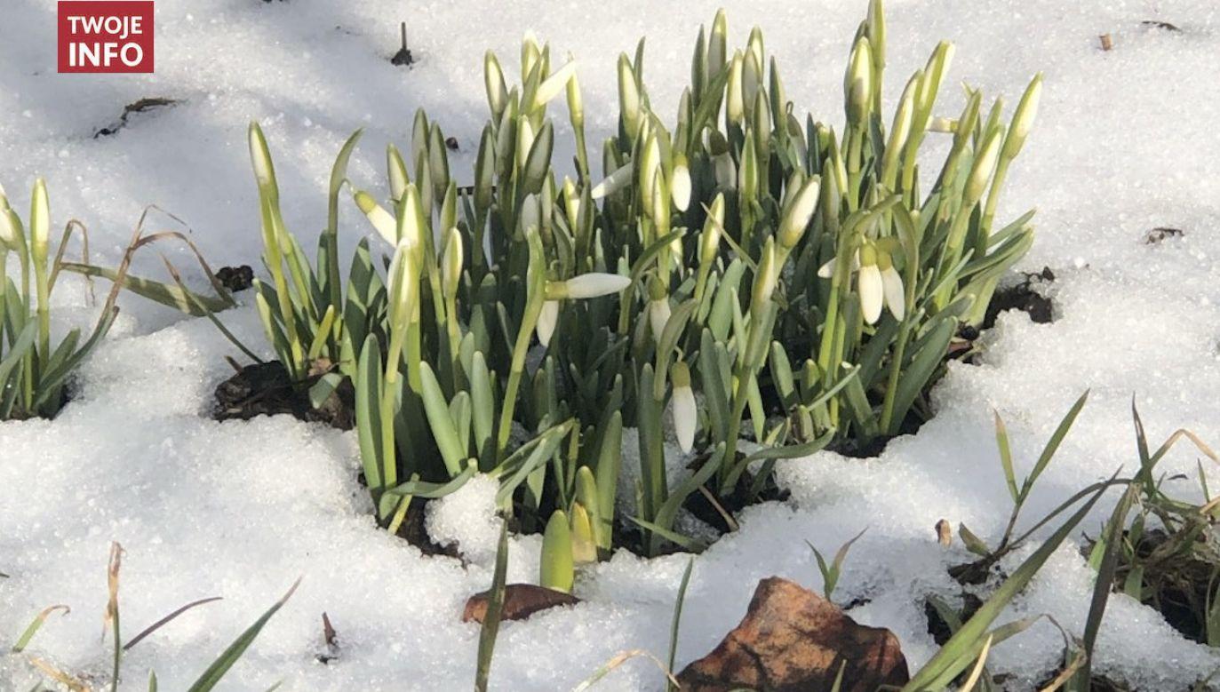 21 marca rozpoczyna się kalendarzowa wiosna (fot. Twoje Info)