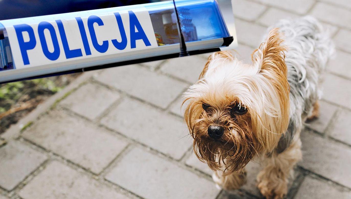 Mężczyzna trafił do policyjnego aresztu (fot. Shutterstock)