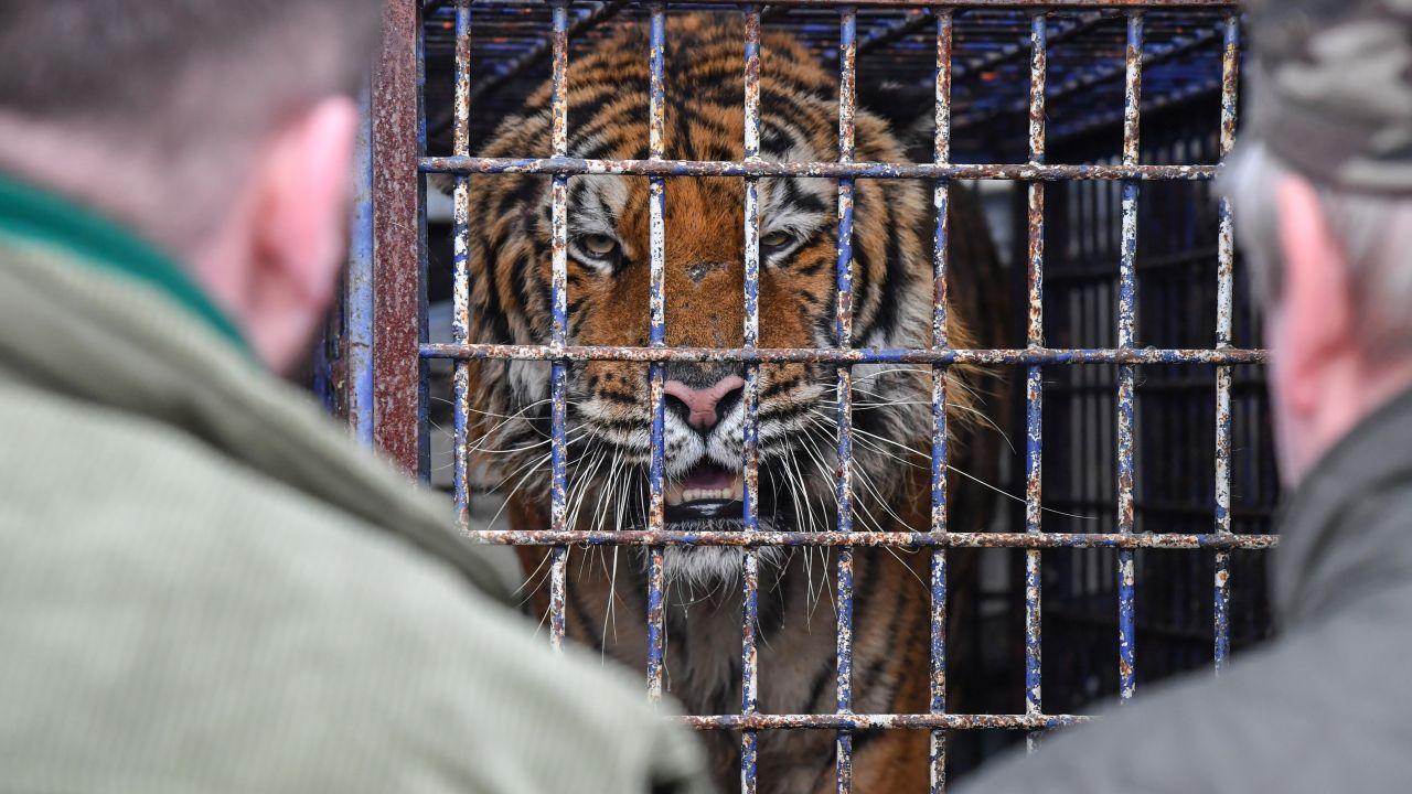 Mężczyzna ma zarzuty znęcania się nad zwierzętami (fot.PAP/Wojtek Jargiło)