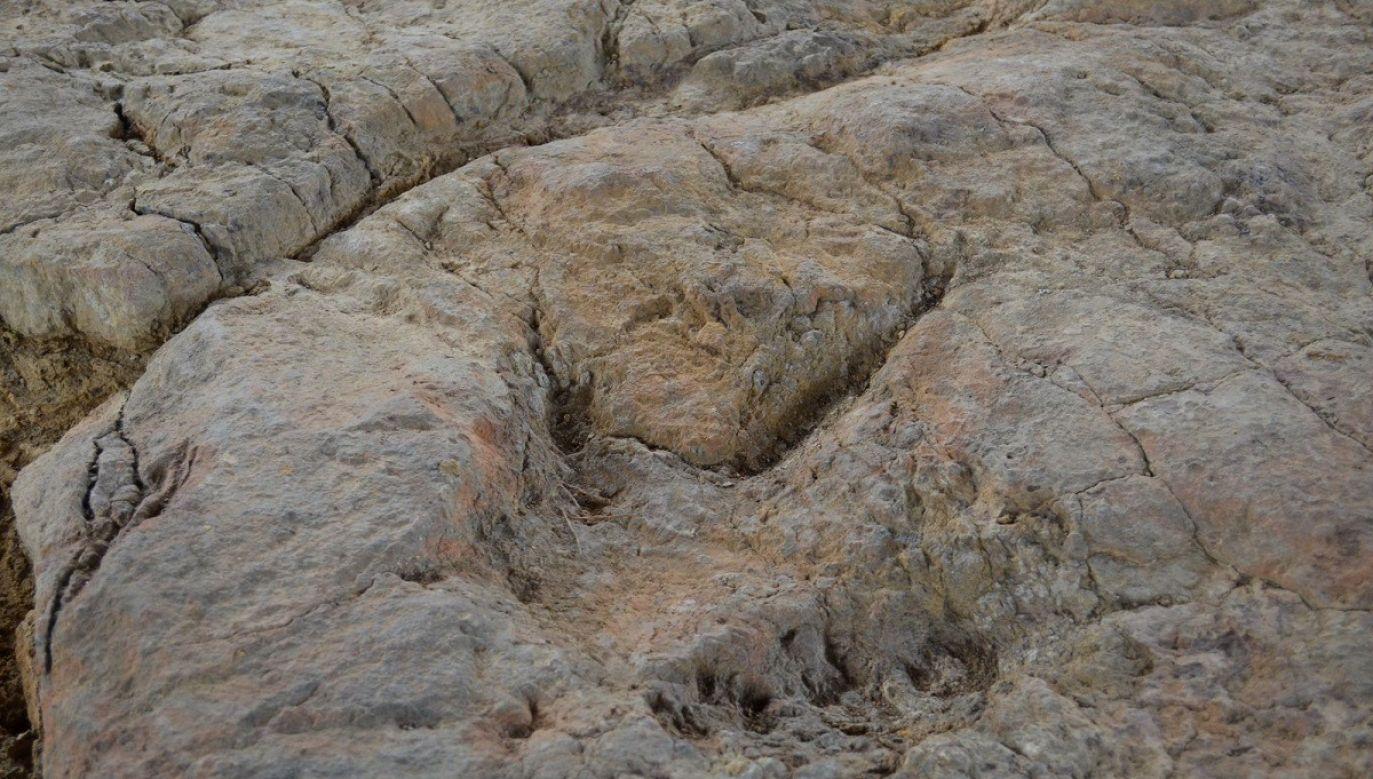 Prócz tropów dinozaurów można tam dostrzec między innymi skamieniałe ślady roślin i szczątki owadów(fot. Facebook/ Lasy Państwowe)