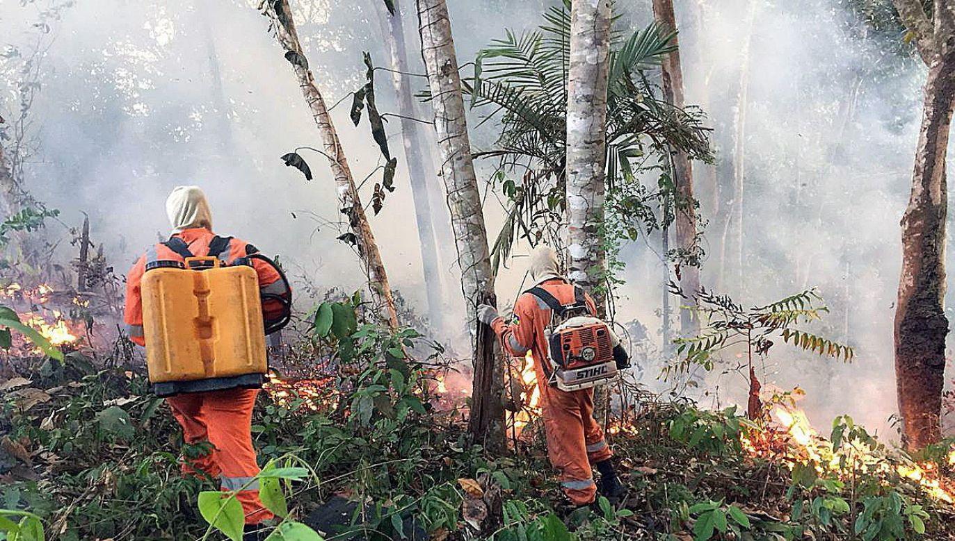 Media informują o kilkuset nowych ogniskach pożaru (fot. EPA/Porto Velho)