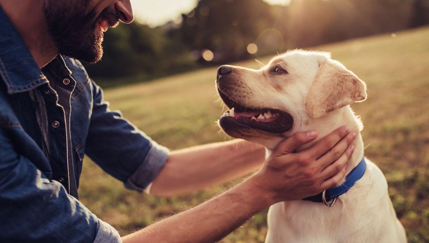 Ponieważ różne rasy psów starzeją się inaczej, prawdopodobnie nigdy nie będzie jednego uniwersalnego rozwiązania (fot. Shutterstock/4 PM production)