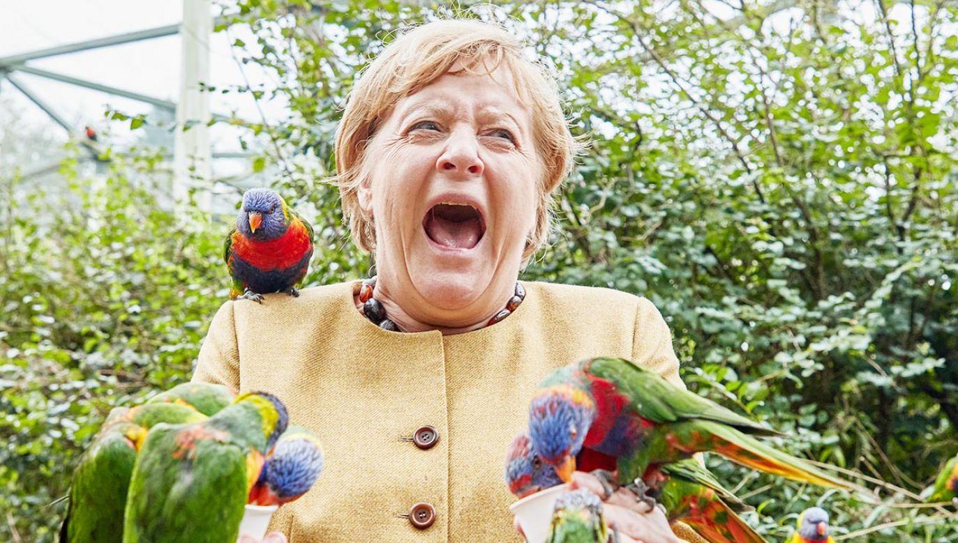 Kanclerz Angela Merkel (fot. PAP/DPA)