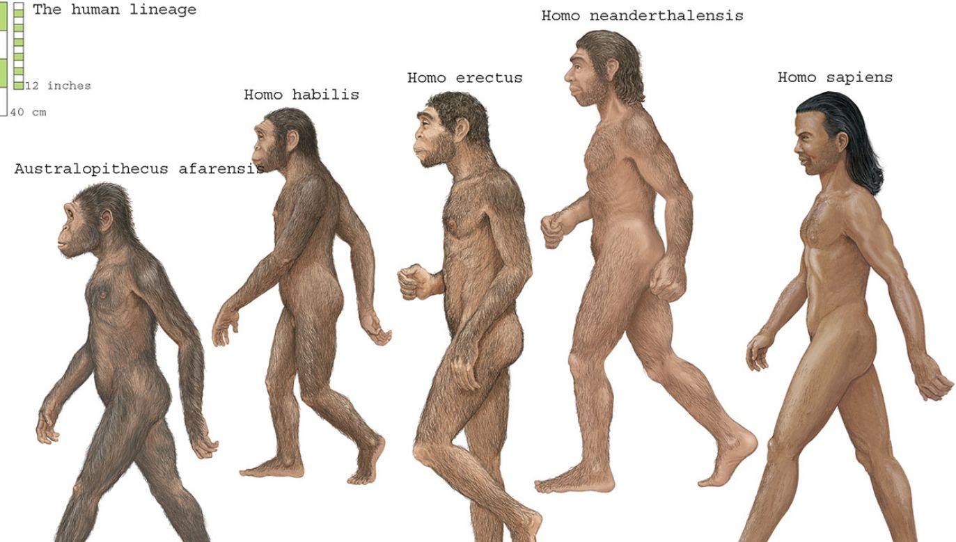 Być może ten stan rzeczy zmienia się na naszych oczach (fot. Encyclopaedia Britannica/Universal Images Group via Getty Images)