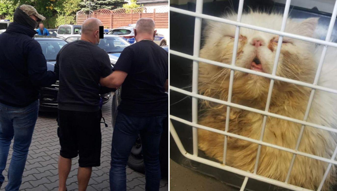 Uratowano 50 kotów (fot. Policja)
