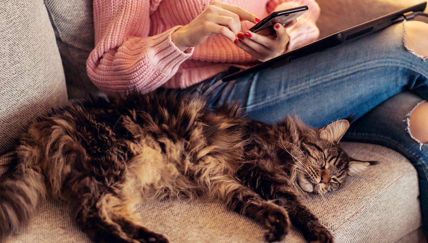 Co czują koty? Aplikacja ma pomóc to zbadać (fot. Shutterstock)