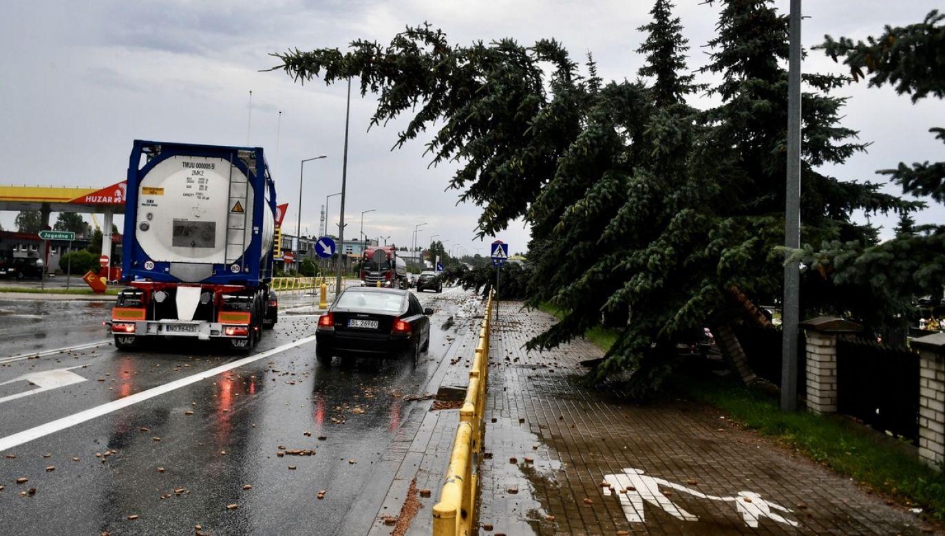 Powalone drzewa po nawałnicy (fot. PAP/Andrzej Lange)