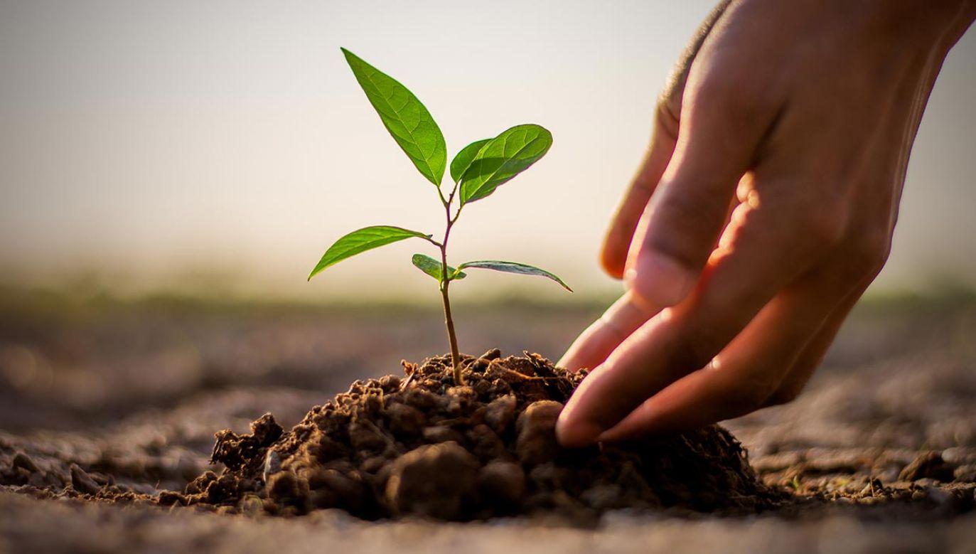 Pojawienie się ludzi przyspieszyło zmiany w roślinności aż 11 razy (fot. Shutterstock/kram-9)